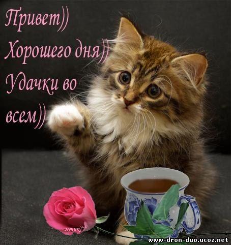 Daxil olunan доброе утро котенок sözüne esasen